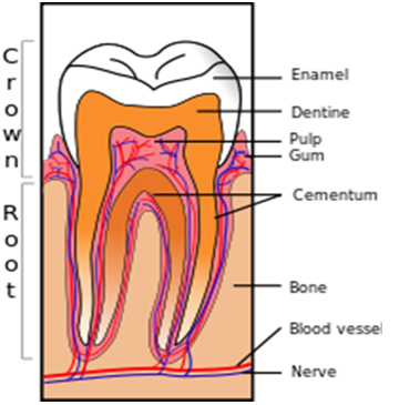 Common Dental Health Problems and their Solutions